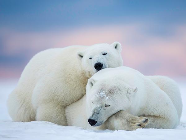 Canadian-Arctic-Summer-1.jpg