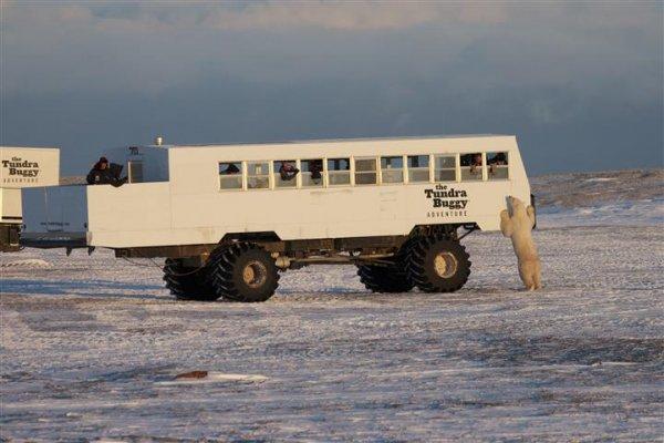 Tundra-tour-courtesy-of-Manitoba-Tourism.jpg