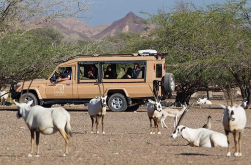 abu-dhabi-safari.jpg