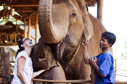 chang-mai-elephant.jpg