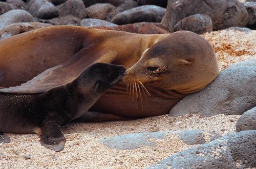 ecuador-sea-lion.jpg